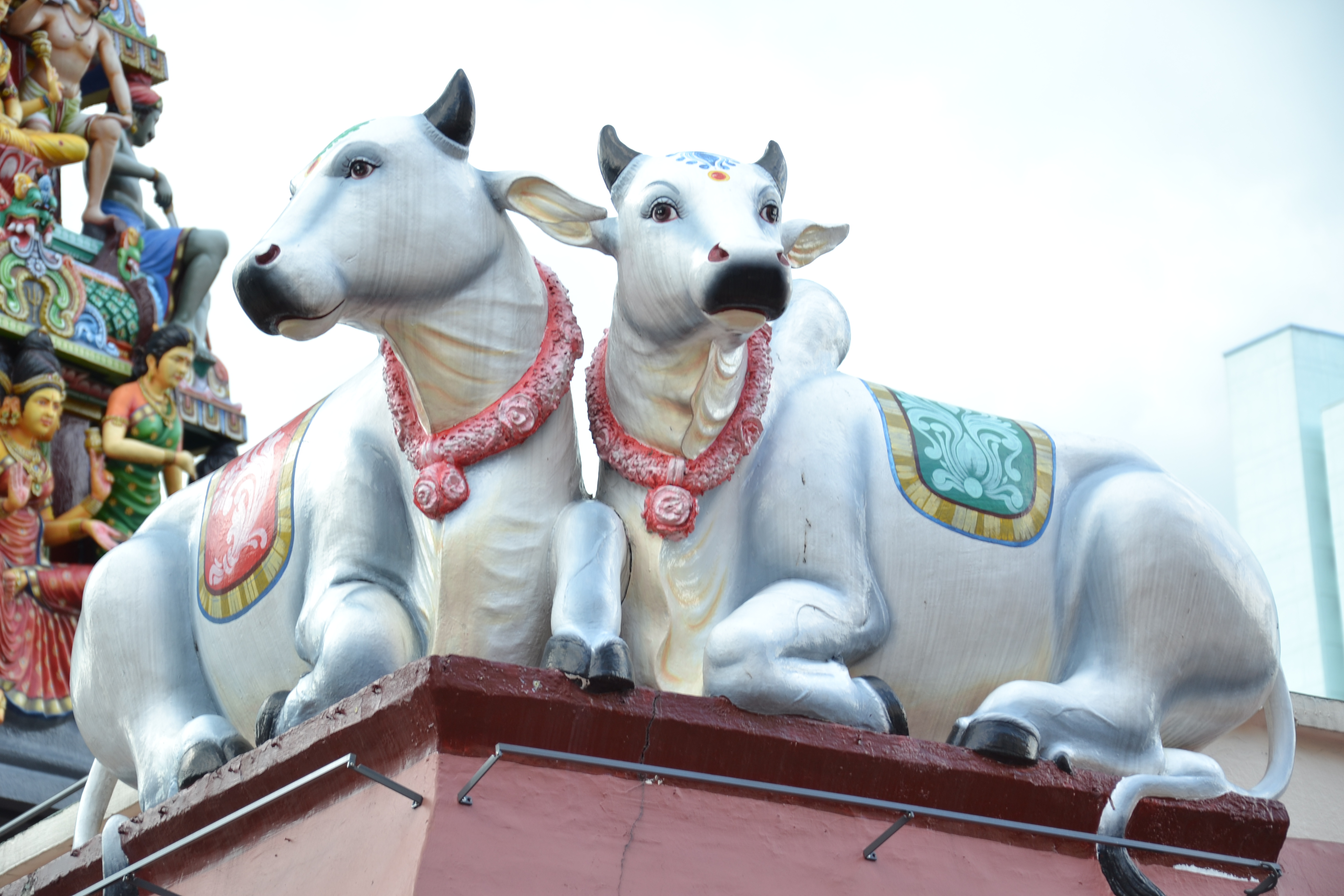 Sacred Cows in Singapore